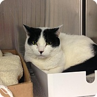 Adopt A Pet :: Missy - East Brunswick, NJ