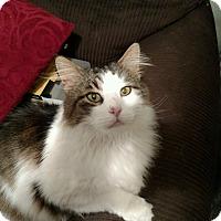 Adopt A Pet :: Bo - Washington, DC