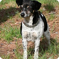 Adopt A Pet :: Addie - Towson, MD