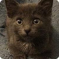 Adopt A Pet :: Zeke - Reston, VA