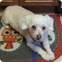 Adopt A Pet :: Winona - Oak Ridge, NJ
