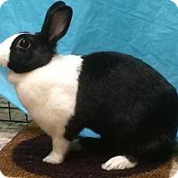 Adopt A Pet :: Stacia - Woburn, MA