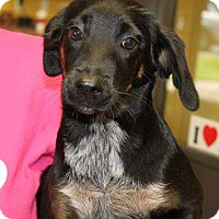 Adopt A Pet :: Jellybean - Sudbury, MA