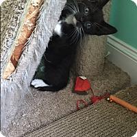 Adopt A Pet :: Bran - Homewood, AL