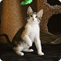 Adopt A Pet :: Snickers - Palmdale, CA
