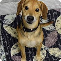 Adopt A Pet :: Freddy - Lisbon, OH