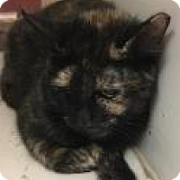 Adopt A Pet :: Tassels 5243 - Columbus, GA