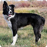 Adopt A Pet :: Sophia - Idaho Falls, ID