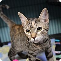 Adopt A Pet :: Gladys - Tomball, TX
