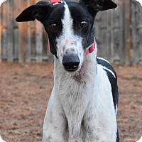 Adopt A Pet :: Sally Hawkins - Cherry Hill, NJ