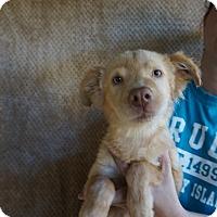 Adopt A Pet :: Lou - Oviedo, FL