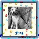 Adopt A Pet :: Tori
