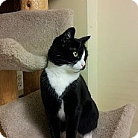 Adopt A Pet :: Tanya - East Meadow, NY