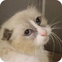 Adopt A Pet :: Kitzel - Pittstown, NJ