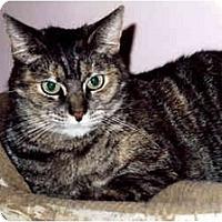 Adopt A Pet :: Cassie - Medway, MA