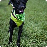 Adopt A Pet :: Barnaby - Miami, FL