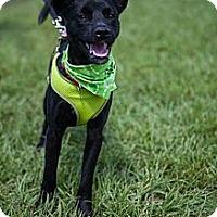 Adopt A Pet :: Barnaby - Miami, FL
