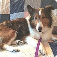 Adopt A Pet :: Becca - Circle Pines, MN