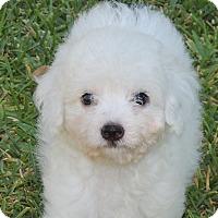 Adopt A Pet :: Klondike - La Habra Heights, CA