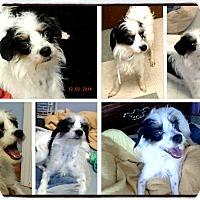 Adopt A Pet :: Frankie - Schererville, IN