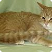 Adopt A Pet :: Sunny - Powell, OH