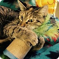 Adopt A Pet :: Luna - Chattanooga, TN