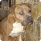 Adopt A Pet :: Sadie - Henderson, NC