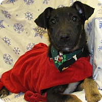 Adopt A Pet :: Merry - Groton, MA