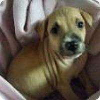 Adopt A Pet :: Bartholomew - Marlton, NJ