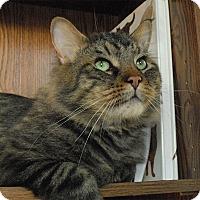 Adopt A Pet :: Ceasar - Winchendon, MA
