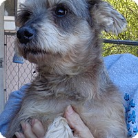 Adopt A Pet :: Rufus - Crump, TN