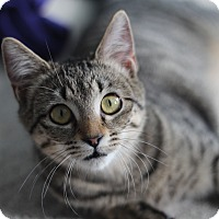 Adopt A Pet :: Savannah - Richmond, VA