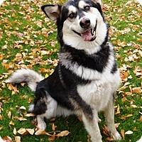 Adopt A Pet :: TEYAH - Seattle, WA