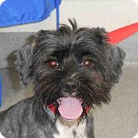 Adopt A Pet :: PEPPERMINT - West Palm Beach, FL