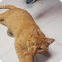 Adopt A Pet :: BLAZE - Tiffin, OH
