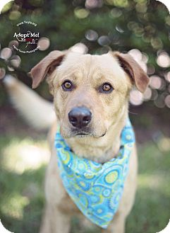 Labrador Retriever Mix Dog for adoption in Kingwood, Texas - Keno