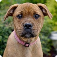 Adopt A Pet :: Daffodil - Westport, CT