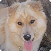 Adopt A Pet :: Dani - Campbell, CA