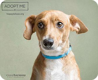 Dachshund/Chihuahua Mix Dog for adoption in Chandler, Arizona - Mandy