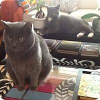 Adopt A Pet :: Oscar - THORNHILL, ON