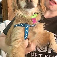 Adopt A Pet :: Jenny - Thousand Oaks, CA