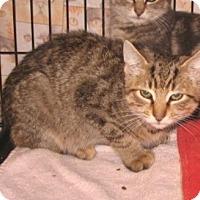 Adopt A Pet :: Colin - Colmar, PA