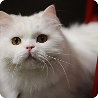 Adopt A Pet :: Double Stuft (Oreo) - Dearborn, MI