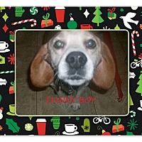 Adopt A Pet :: DANNY BOY - Ventnor City, NJ