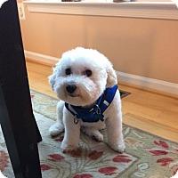 Adopt A Pet :: Louie - Delaplane, VA