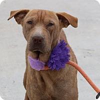 Adopt A Pet :: Calista - Pluckemin, NJ