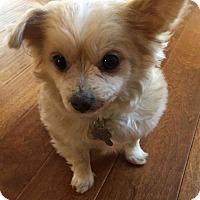 Adopt A Pet :: Teddy - San Jose, CA