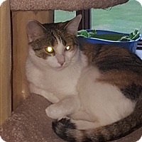 Adopt A Pet :: Amelia - Salem, OH