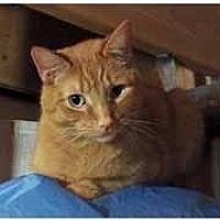 Adopt A Pet :: Morris - Chicago, IL