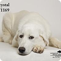 Adopt A Pet :: Crystal - Baton Rouge, LA